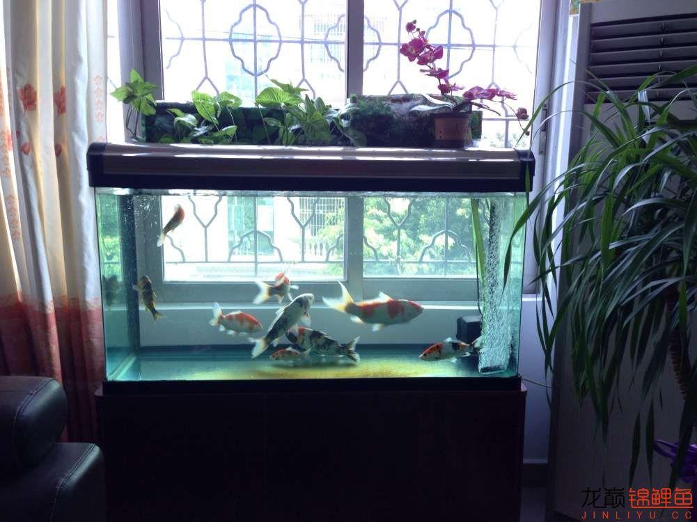 我的锦鲤路想认识更多朋友 西安龙鱼论坛 西安博特第4张