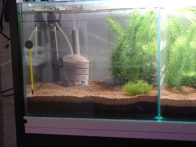未知的世界孔雀鱼缸处成 西安龙鱼论坛 西安博特第2张
