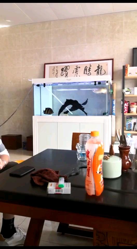 这鱼看的也不赖刷刷存在感 西安龙鱼论坛