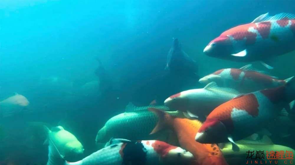 鱼好是好【西安水族箱批售】可是总觉得变形了? 西安龙鱼论坛 西安博特第3张