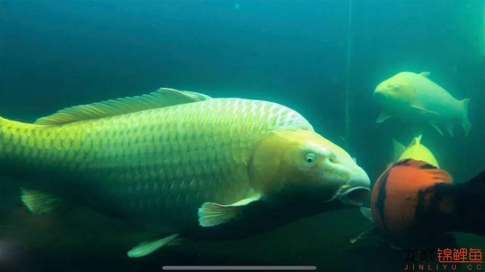 鱼好是好【西安水族箱批售】可是总觉得变形了? 西安龙鱼论坛 西安博特第6张