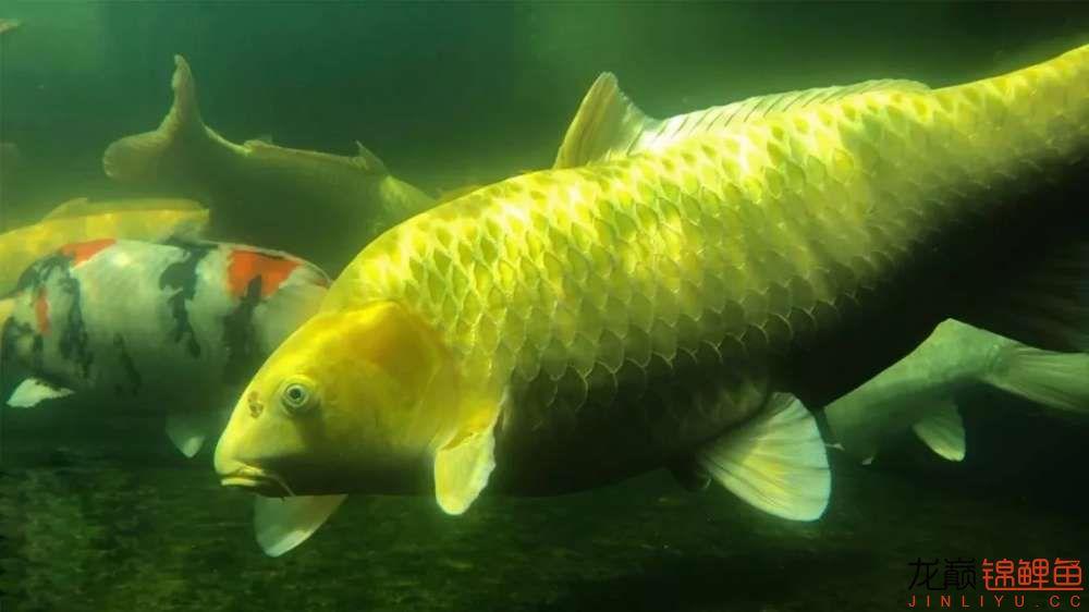 鱼好是好【西安水族箱批售】可是总觉得变形了? 西安龙鱼论坛 西安博特第7张