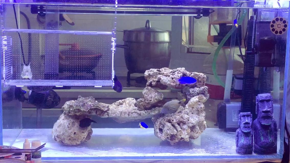 整缸海水【西安水族宠物展】鱼 西安观赏鱼信息 西安博特第1张
