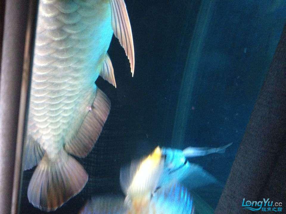 求助大神帮忙看看这怎么回事怎么医 西安观赏鱼信息 西安博特第1张