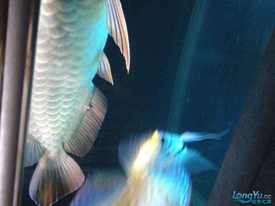 求助大神帮忙看看这怎么回事怎么医 西安观赏鱼信息 西安博特第3张