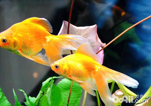 检疫☞个人观点 西安观赏鱼信息 西安博特第2张