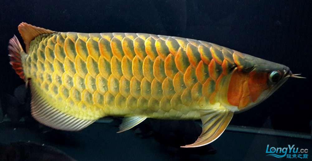 【西安鱼缸厂家】全白灯60cm+ 西安龙鱼论坛 西安博特第3张
