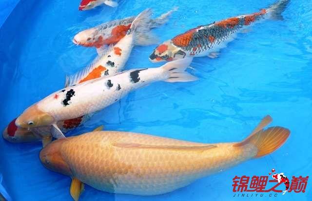 新的一天的开始早上好 西安观赏鱼信息 西安博特第2张