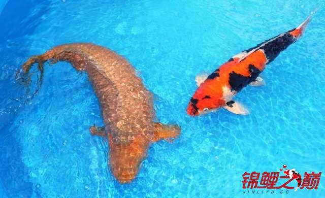 新的一天的开始早上好 西安观赏鱼信息 西安博特第4张