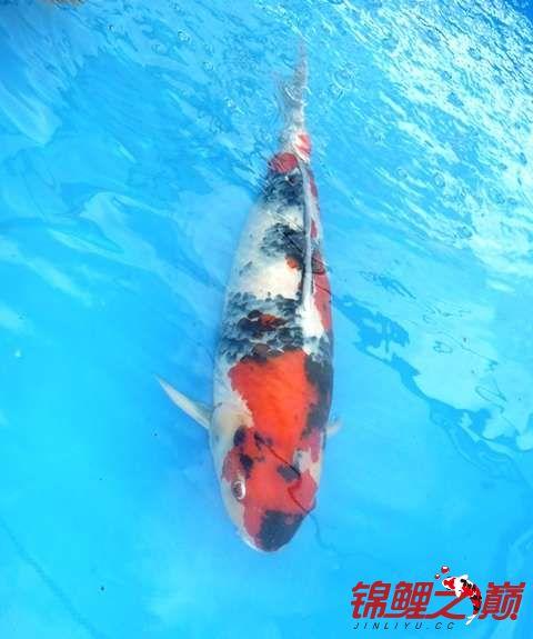 新的一天的开始早上好 西安观赏鱼信息 西安博特第6张