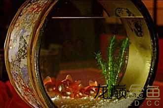 哪里能买到这样的金鱼缸 西安观赏鱼信息 西安博特第2张