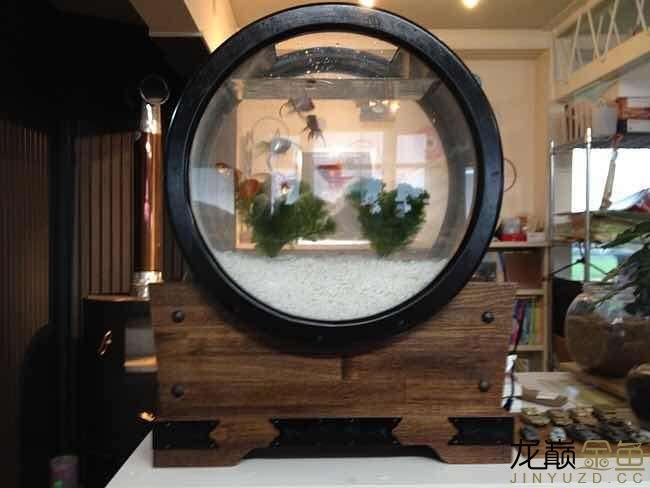 哪里能买到这样的金鱼缸 西安观赏鱼信息 西安博特第4张