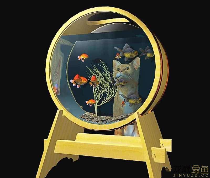 哪里能买到这样的金鱼缸 西安观赏鱼信息 西安博特第5张