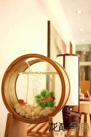 哪里能买到这样的金鱼缸 西安观赏鱼信息 西安博特第6张