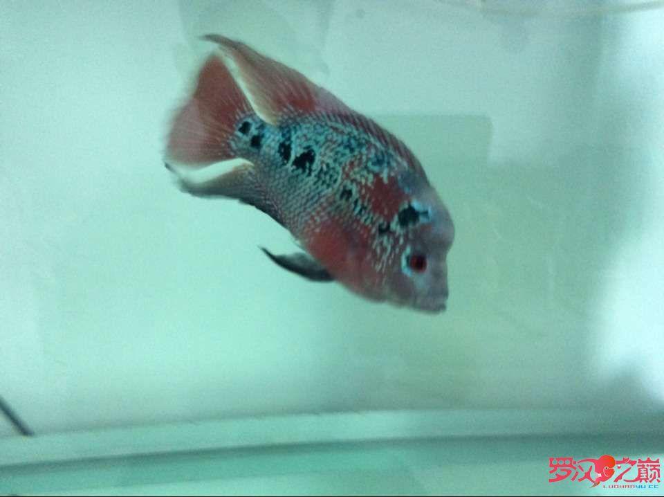说说灯GΛΚΟLED水陆两用潜水灯 西安观赏鱼信息 西安博特第2张