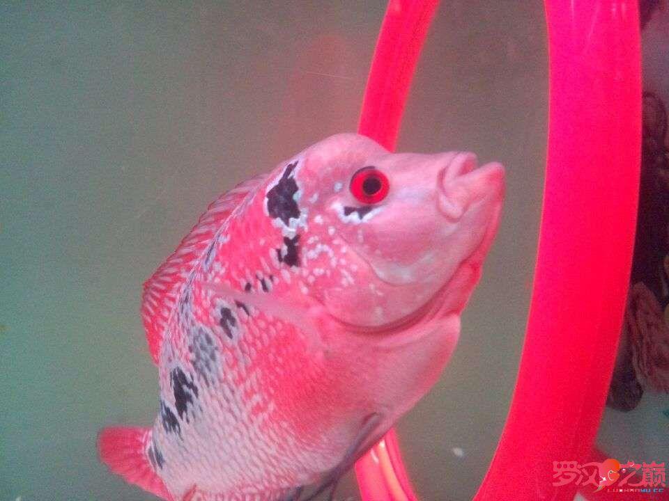 说说灯GΛΚΟLED水陆两用潜水灯 西安观赏鱼信息 西安博特第4张