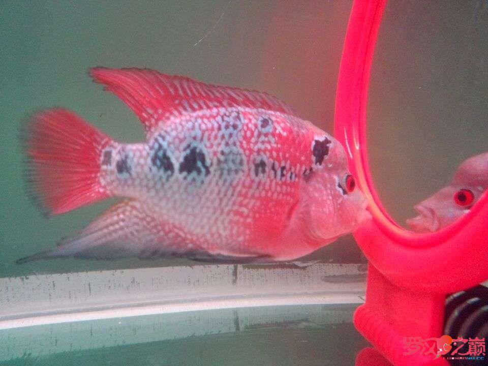 说说灯GΛΚΟLED水陆两用潜水灯 西安观赏鱼信息 西安博特第3张