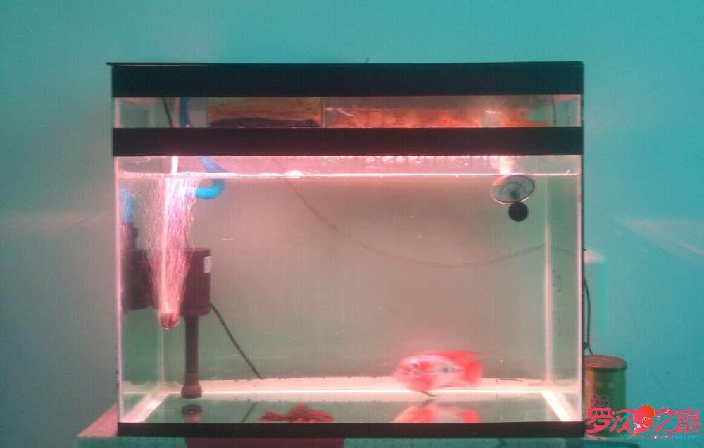说说灯GΛΚΟLED水陆两用潜水灯 西安观赏鱼信息 西安博特第6张