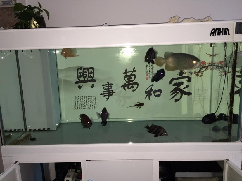 速倍妥产品试用报【西安慈鲷大全】告 西安观赏鱼信息 西安博特第9张