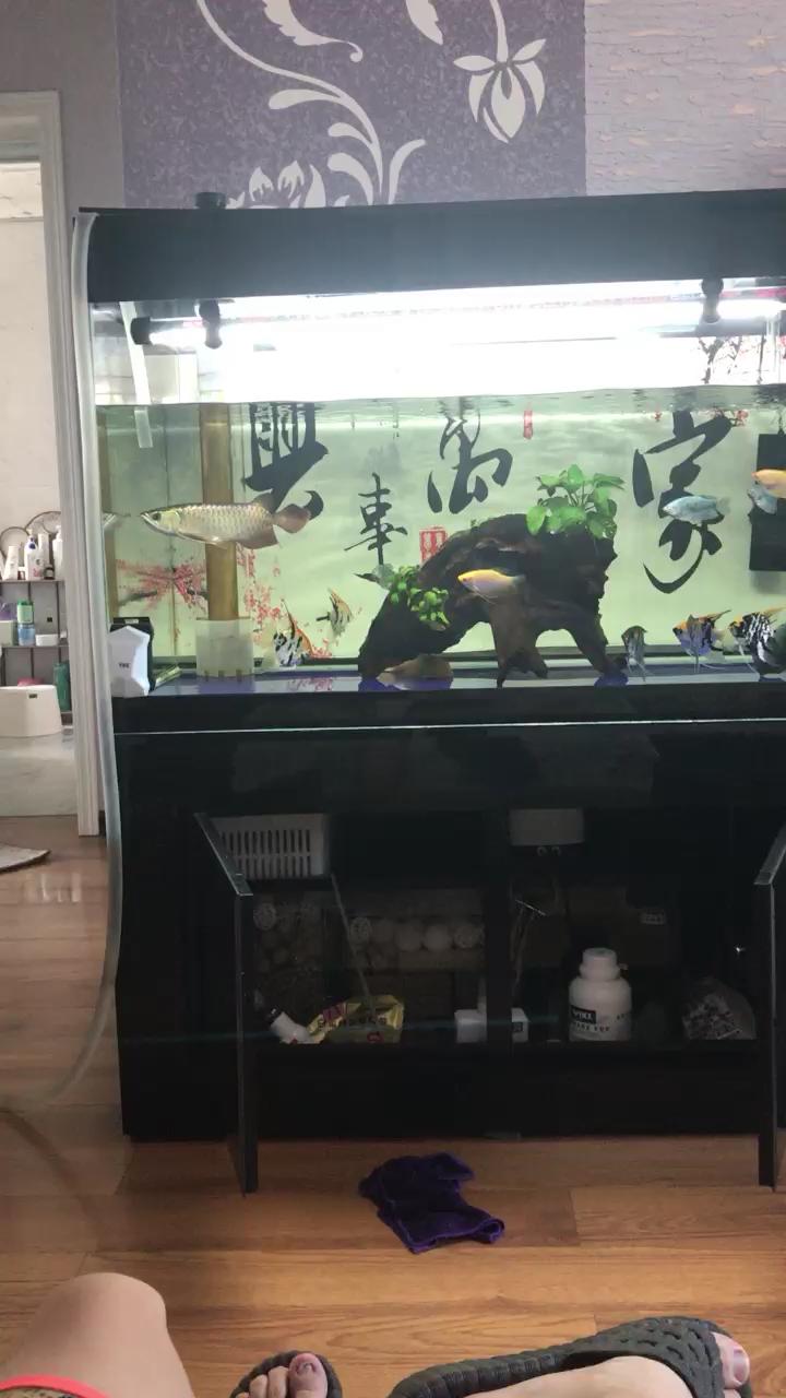 日常换水咯龙鱼 西安龙鱼论坛 西安博特第1张