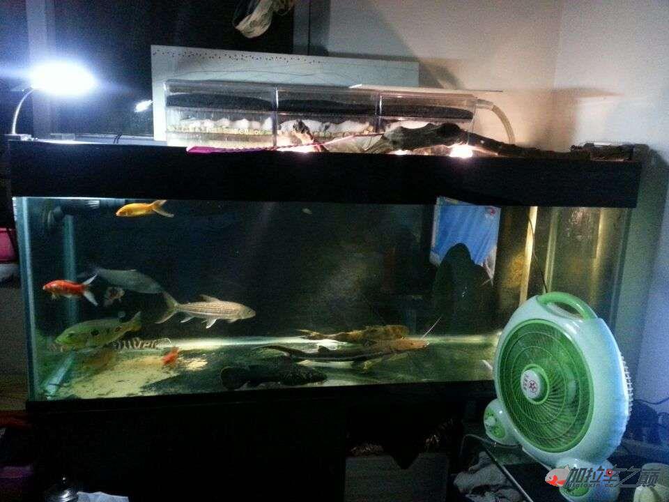 屌丝男渴望一个超大鱼缸 西安龙鱼论坛 西安博特第2张