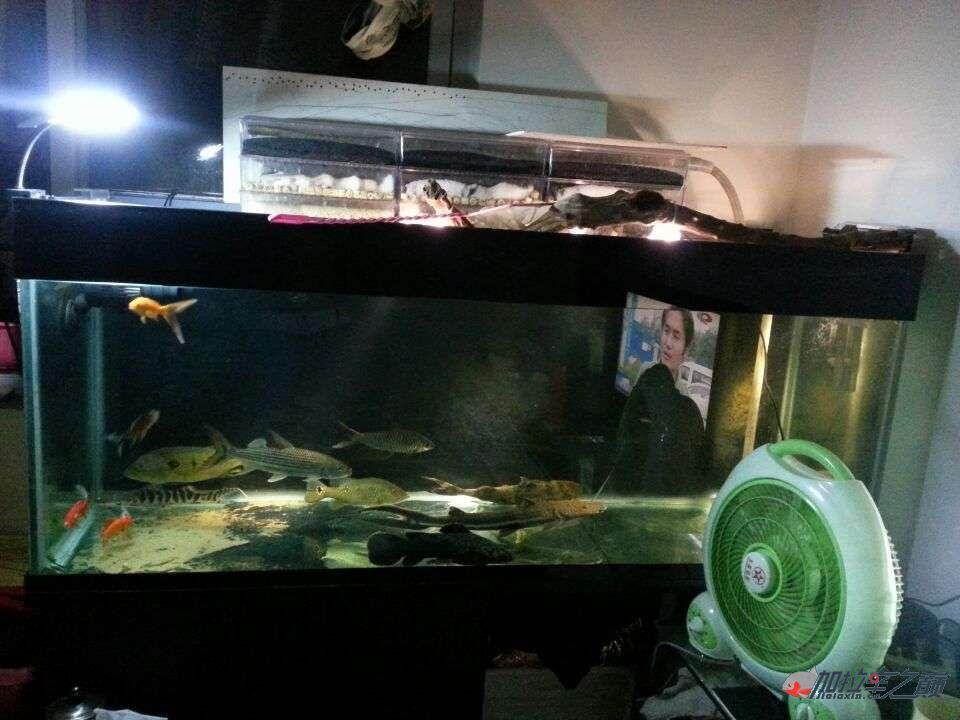 屌丝男渴望一个超大鱼缸 西安龙鱼论坛 西安博特第3张