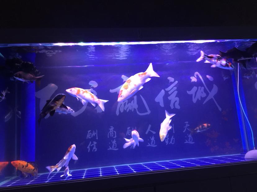 用神阳懒人养鱼也能做到水清鱼靓 西安龙鱼论坛 西安博特第1张
