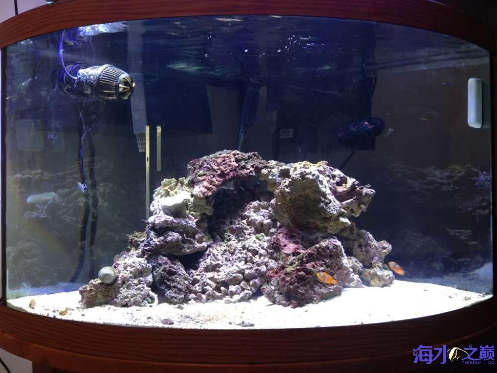 扇形海水缸 西安龙鱼论坛 西安博特第3张