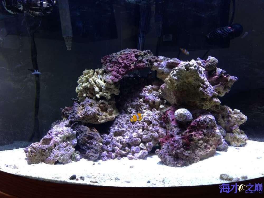 扇形海水缸 西安龙鱼论坛 西安博特第4张