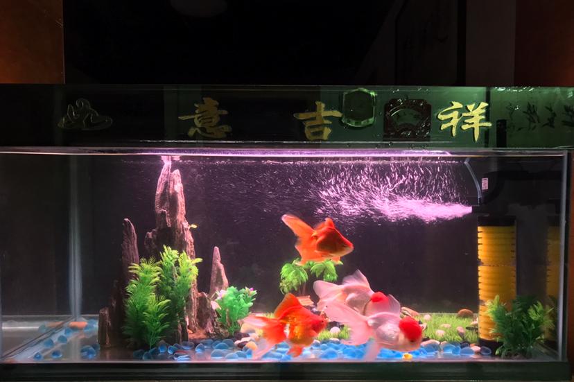 如何持续养好水? 西安龙鱼论坛 西安博特第1张