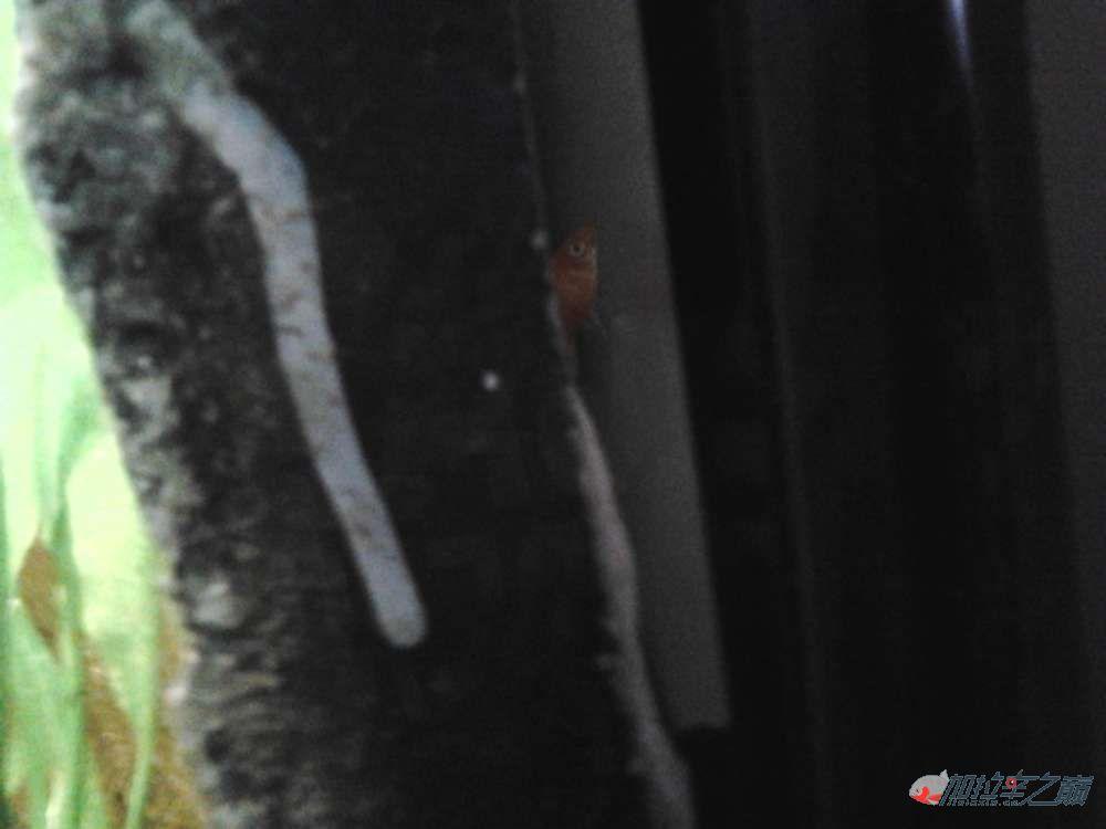 新的1206060的水【西安哪个水族店有直纹飞凤鱼】虎鱼缸 西安龙鱼论坛 西安博特第1张