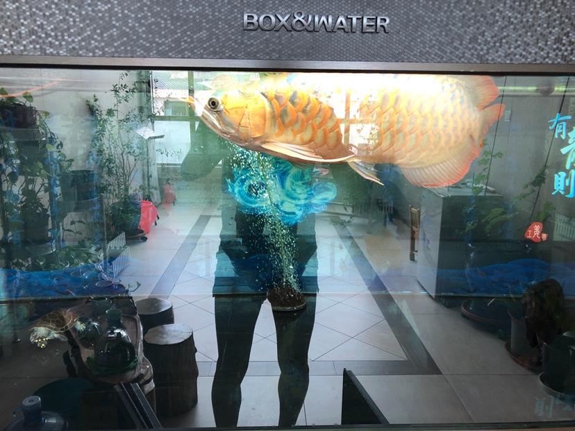 怎样让体型更宽一点 西安观赏鱼信息 西安博特第1张
