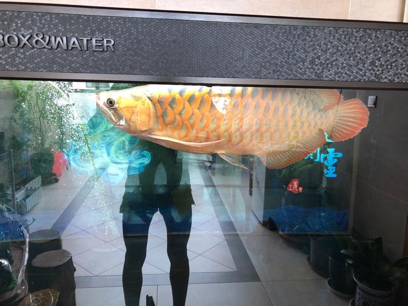怎样让体型更宽一点 西安观赏鱼信息 西安博特第2张