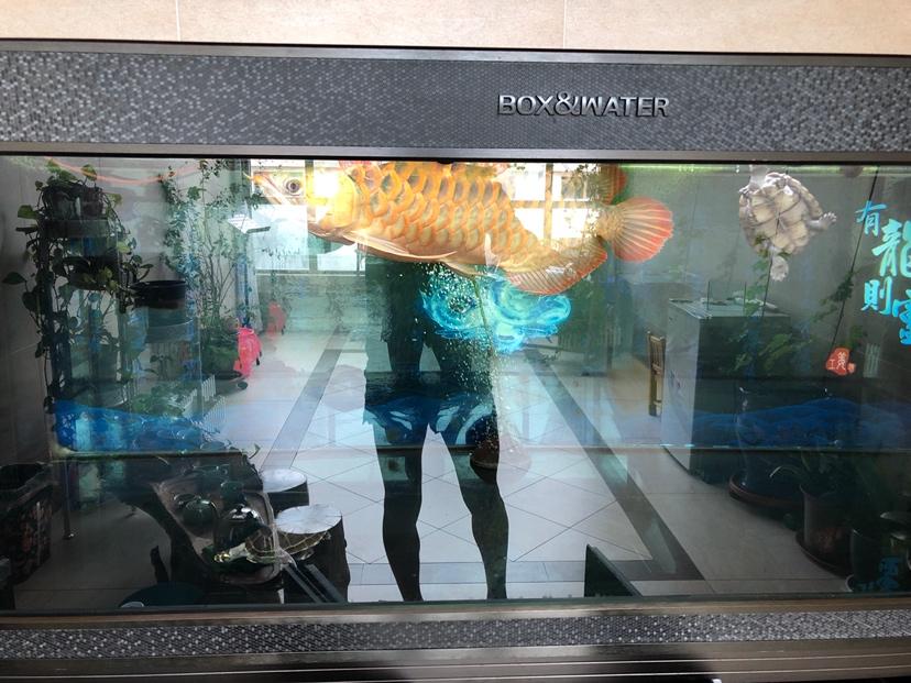 怎样让体型更宽一点 西安观赏鱼信息 西安博特第3张