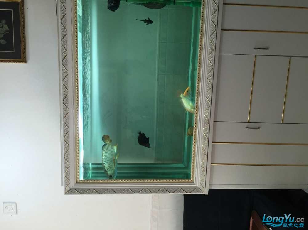 高手看看公母能过背不? 西安观赏鱼信息 西安博特第2张