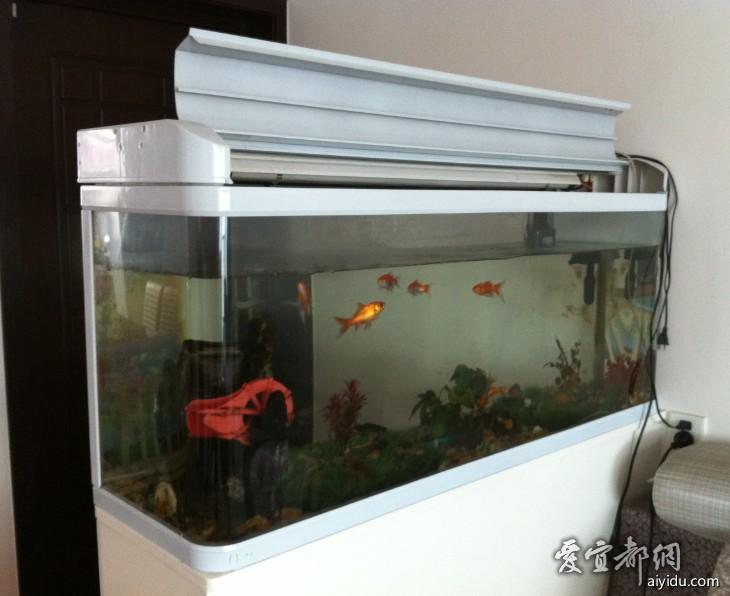 再来个视频罗汉鱼 西安观赏鱼信息