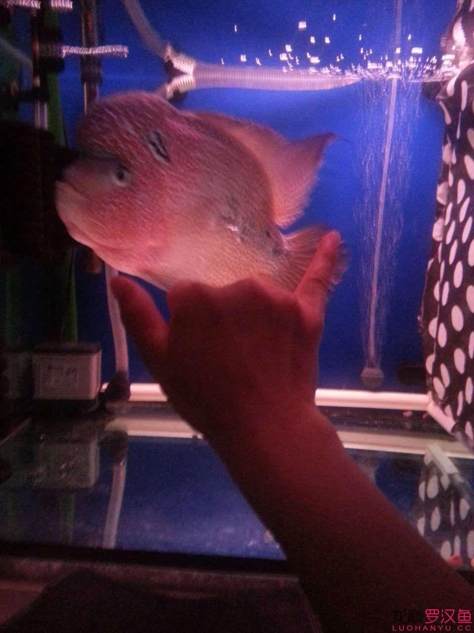 贼罗堂有好罗+ 爱鱼点点 西安龙鱼论坛 西安博特第3张