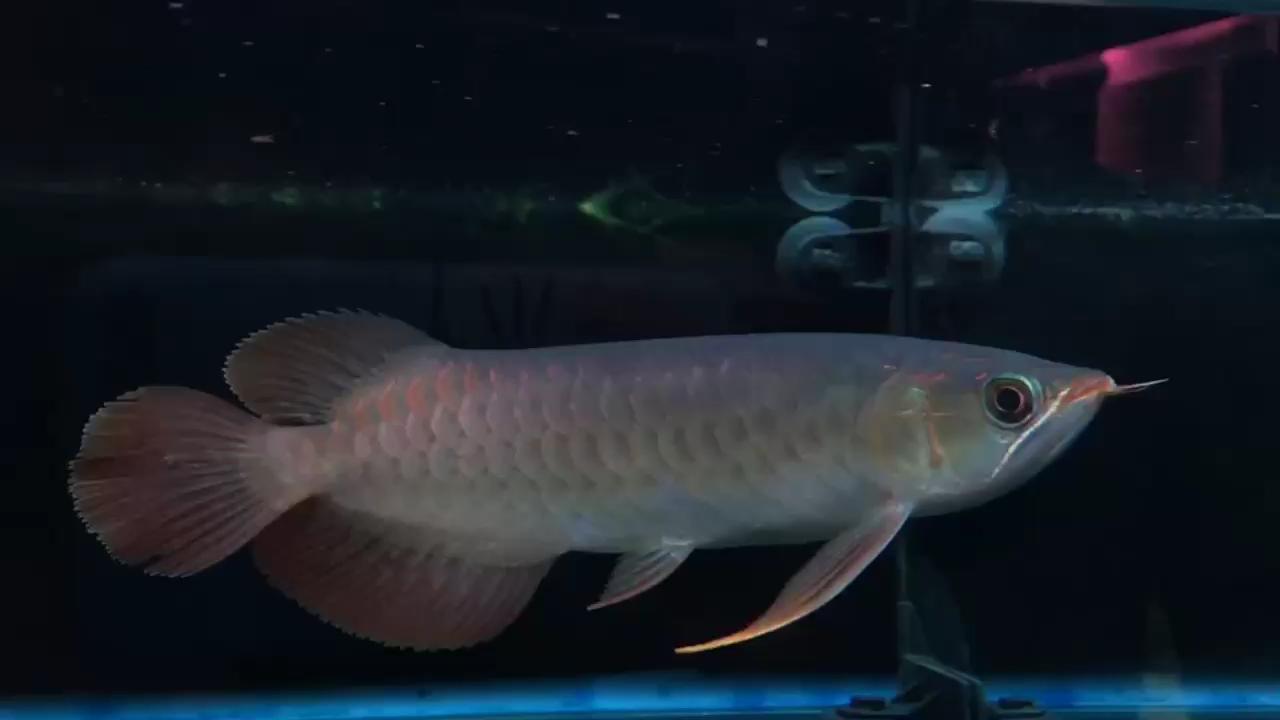 每天喂喂鱼 我的乐趣 西安观赏鱼信息