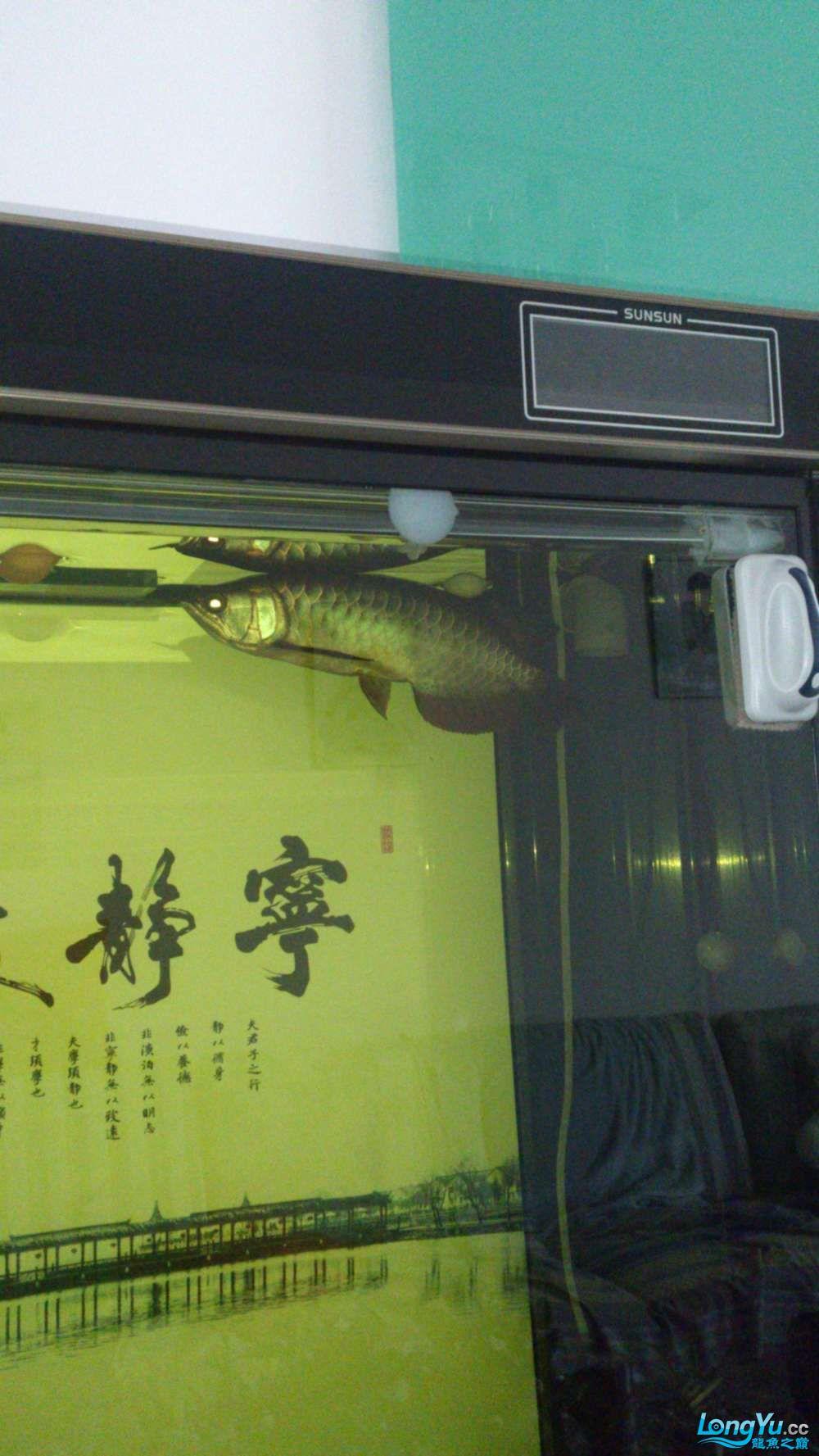 求助求救求支援 西安龙鱼论坛 西安博特第2张