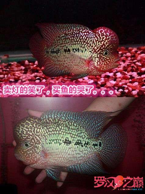 卖灯的笑了买鱼的哭了 西安龙鱼论坛 西安博特第3张