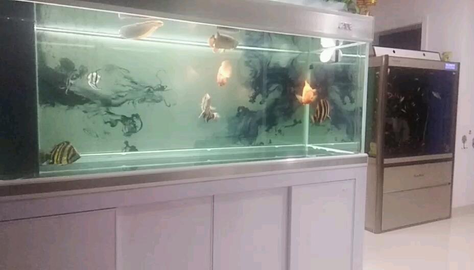 鹦鹉鱼真厉害虎鱼 西安观赏鱼信息