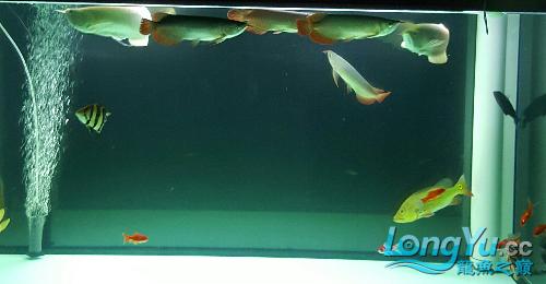 终于看见曙光 西安观赏鱼信息 西安博特第1张