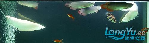 终于看见曙光 西安观赏鱼信息 西安博特第3张