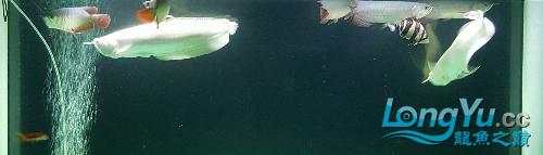 终于看见曙光 西安观赏鱼信息 西安博特第4张