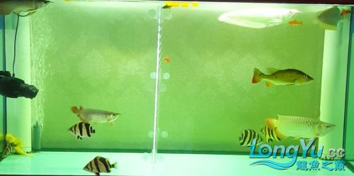 终于看见曙光 西安观赏鱼信息 西安博特第5张