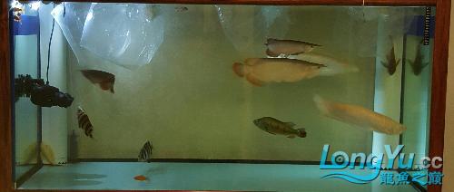 终于看见曙光 西安观赏鱼信息 西安博特第7张