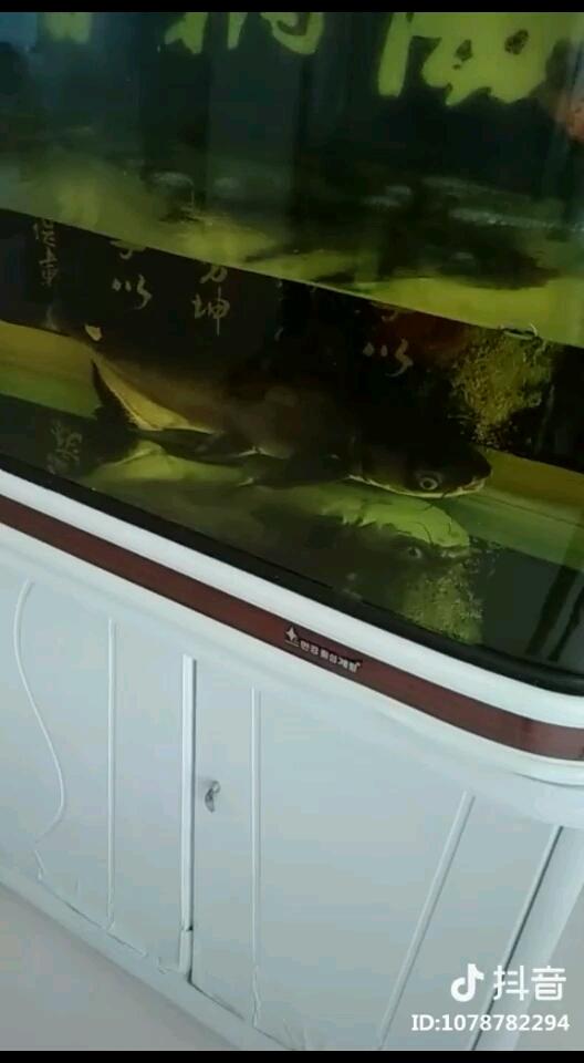大家早上好鱼种混养 西安龙鱼论坛