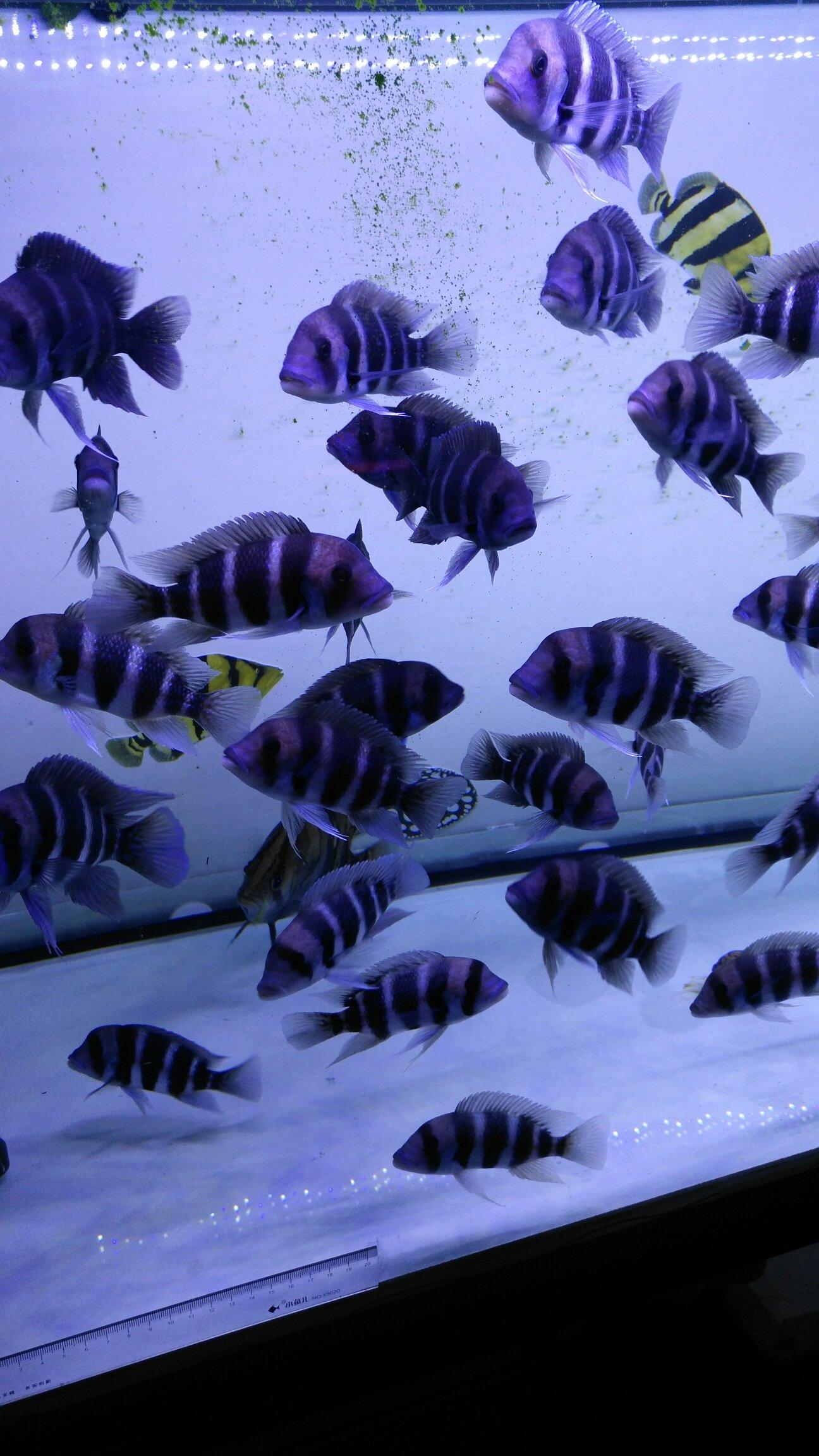 我的小布 西安观赏鱼信息 西安博特第1张