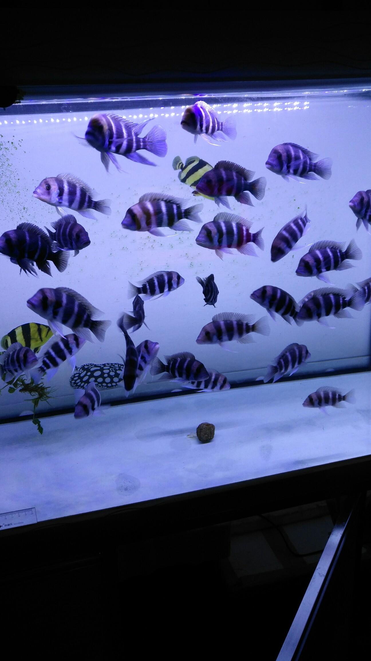 我的小布 西安观赏鱼信息 西安博特第3张