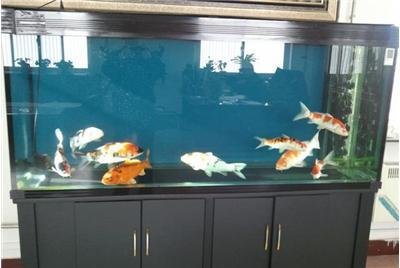 新手喂鱼一定要注意 西安观赏鱼信息 西安博特第2张